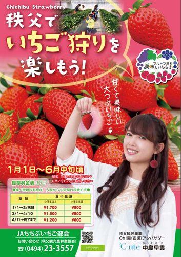 chichibu-ichigo01.jpg